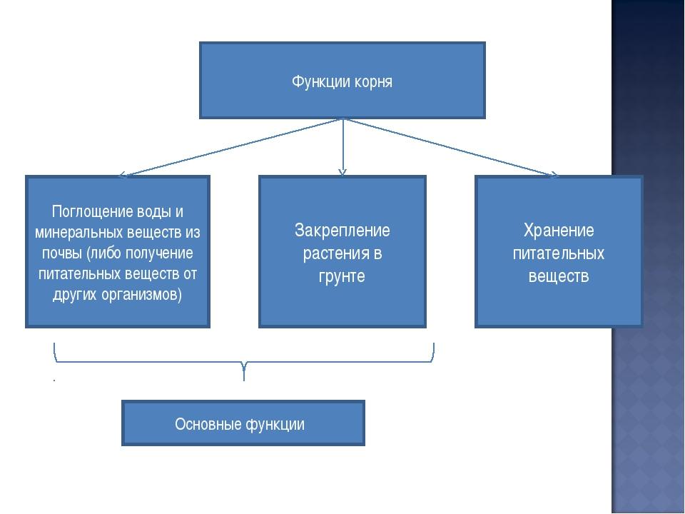 Функции корня Хранение питательных веществ Поглощение воды и минеральных веще...
