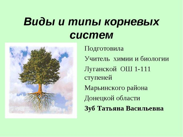 Виды и типы корневых систем Подготовила Учитель химии и биологии Луганской ОШ...