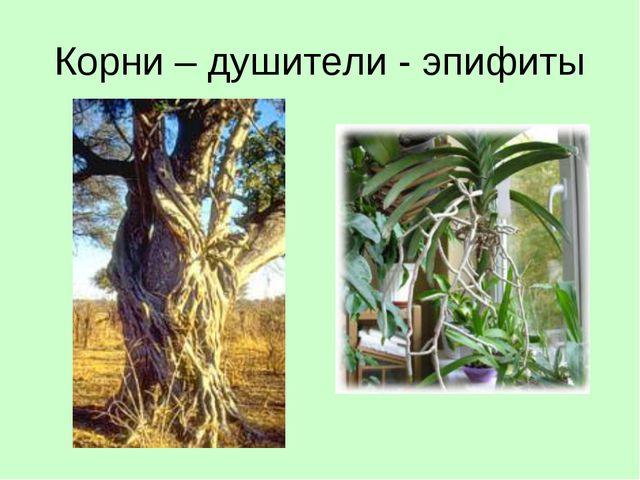 Корни – душители - эпифиты