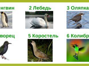 1 Пингвин 2 Лебедь 3 Оляпка 4 Скворец 5 Коростель 6 Колибри