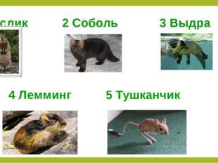 1 Суслик 2 Соболь 3 Выдра 4 Лемминг 5 Тушканчик