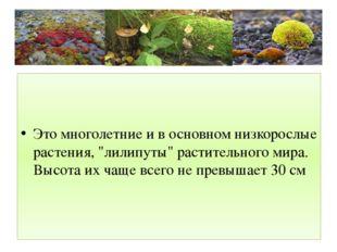 """Это многолетние и в основном низкорослые растения, """"лилипуты"""" растительного"""