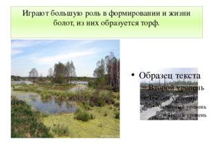 Играют большую роль в формировании и жизни болот, из них образуется торф.