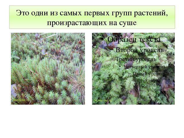 Это одни из самых первых групп растений, произрастающих на суше