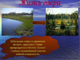 Небольшие озёра со временем мелеют, зарастают. Озеро превращается в болото. Б