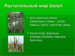 Растительный мир болот Для низинных болот характерны травы : осоки, камыш, ро