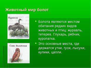 Животный мир болот Болота являются местом обитания редких видов животных и пт
