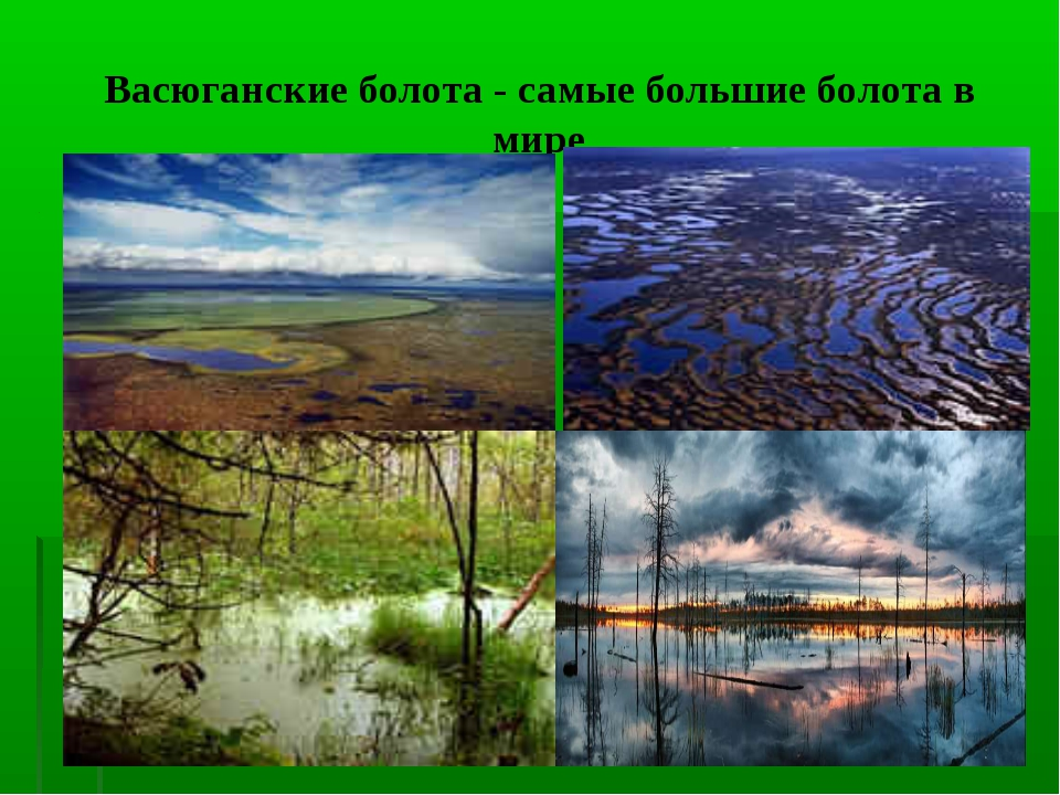 Васюганские болота- самые большие болота в мире