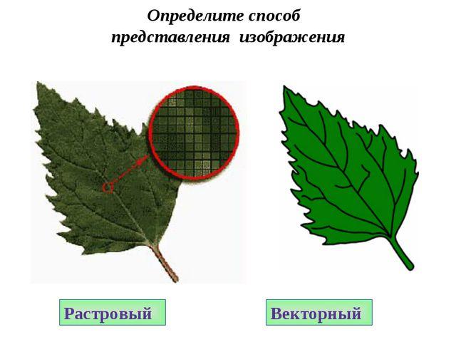 Растровый Векторный Определите способ представления изображения