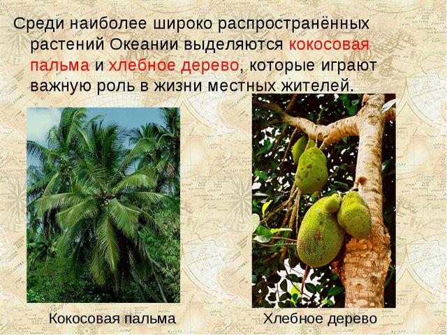Кокосовая пальма Хлебное дерево Среди наиболее широко распространённых растен...