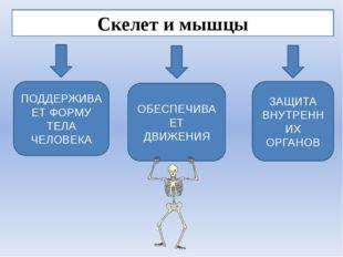 Скелет и мышцы ЗАЩИТА ВНУТРЕННИХ ОРГАНОВ ПОДДЕРЖИВАЕТ ФОРМУ ТЕЛА ЧЕЛОВЕКА ОБЕ