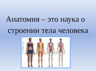 Анатомия – это наука о строении тела человека
