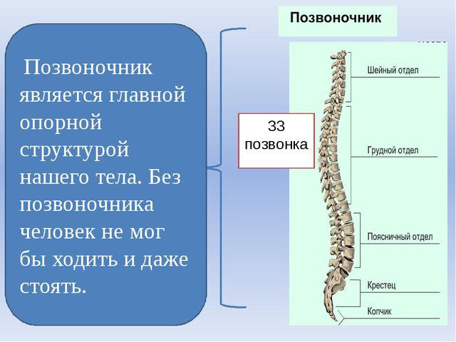 Позвоночник является главной опорной структурой нашего тела. Без позвоночни...