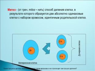 Митоз - (от греч. mitos – нить) способ деления клетки, в результате которого