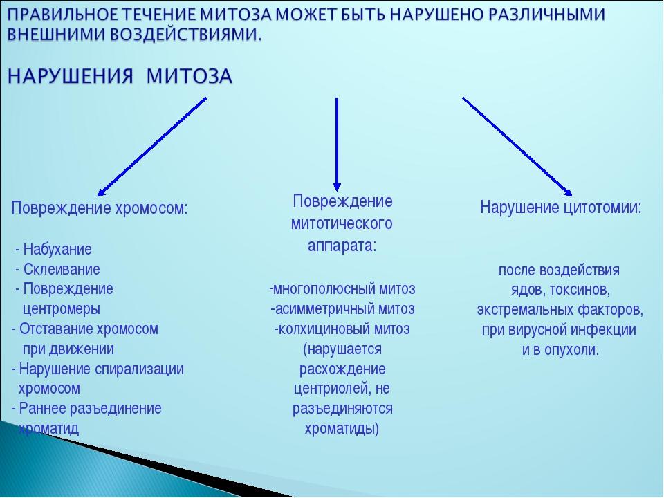 Повреждение митотического аппарата: многополюсный митоз -асимметричный митоз...