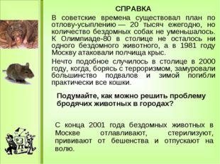 СПРАВКА В советские времена существовал план по отлову-усыплению— 20 тысяч