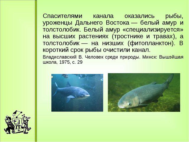 Спасителями канала оказались рыбы, уроженцы Дальнего Востока— белый амур и...