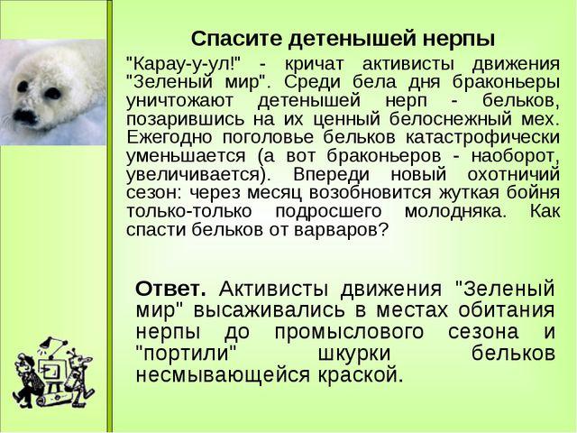"Спасите детенышей нерпы ""Карау-у-ул!"" - кричат активисты движения ""Зеленый м..."