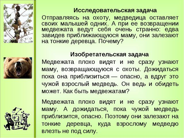 Отправляясь на охоту, медведица оставляет своих малышей одних. А при ее возв...