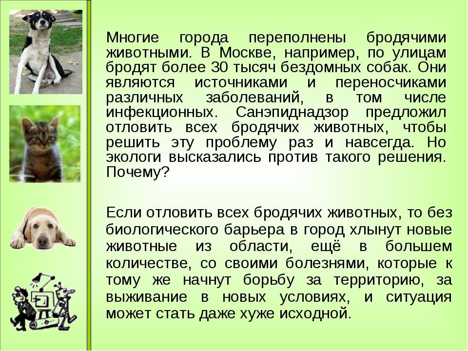 Многие города переполнены бродячими животными. В Москве, например, по улицам...