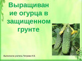 Выращивание огурца в защищенном грунте. Выполнила учитель Петрова И.В.