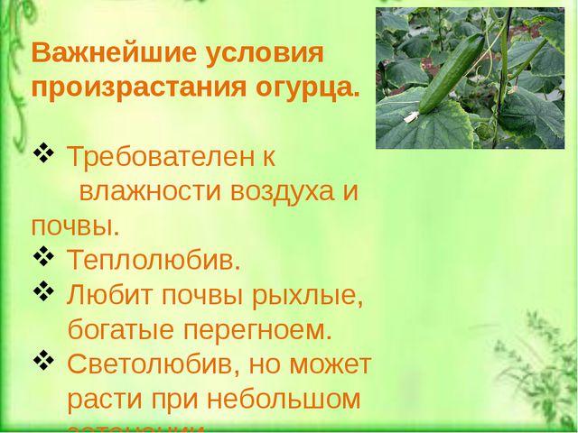 Важнейшие условия произрастания огурца. Требователен к влажности воздуха и п...