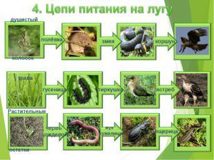 полёвка змея коршун душистый колосок ястреб гусеница тиркушка жук жужелица ящ