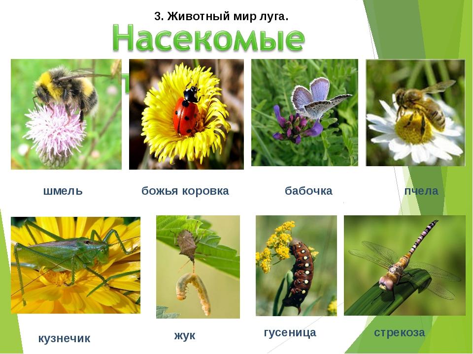 шмель божья коровка бабочка пчела кузнечик жук гусеница стрекоза 3. Животный...