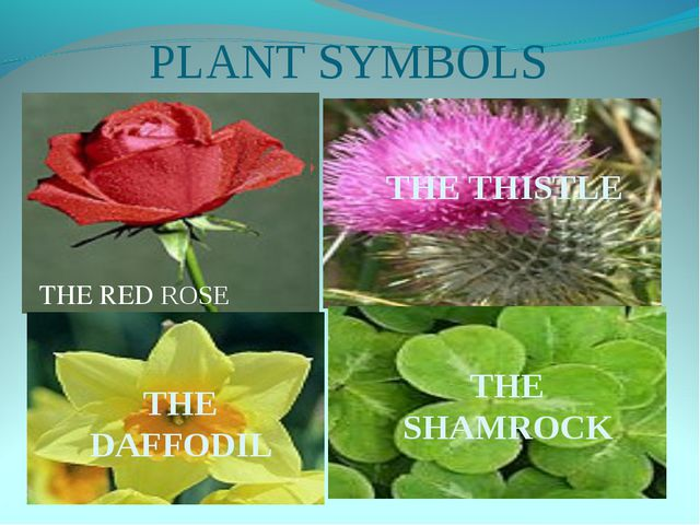 PLANT SYMBOLS THE THISTLE THE DAFFODIL THE SHAMROCK THE RED ROSE