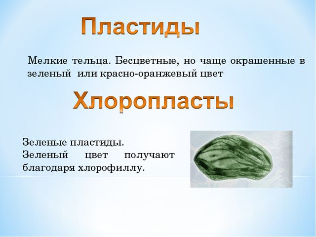 Мелкие тельца. Бесцветные, но чаще окрашенные в зеленый или красно-оранжевый...