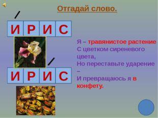 Отгадай слово. И Р И С И Р И С Я – травянистое растение С цветком сиреневого