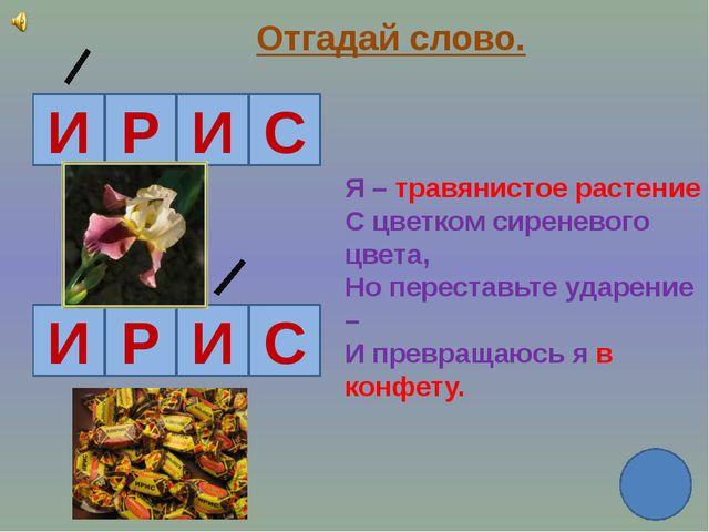 Отгадай слово. И Р И С И Р И С Я – травянистое растение С цветком сиреневого...