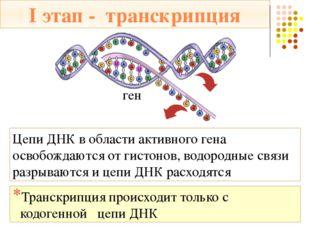 I этап - транскрипция Транскрипция происходит с помощью фермента ДНК-полимера