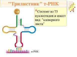1. Инициация – начало биосинтеза Малая субъединица рибосомы нанизывается на м