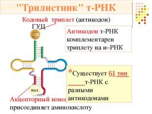 Стадии трансляции м – РНК: АУГ ААГ ЦГУ ГГЦ Затем происходит присоединение бол
