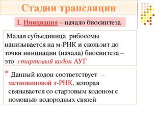 Функциональный центр рибосомы – ФЦР (два триплета) А аминокислотный центр цен