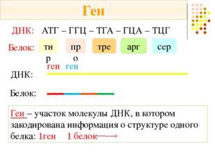ДНК: АТГ – ГГЦ – ТГА – ГЦА – ТЦГ Белок: тир про тре арг сер ДНК: Белок: ген Г