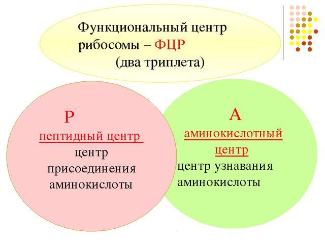 Стадии трансляции 3.Терминация – окончание биосинтеза На стоп-кодонах синтез...