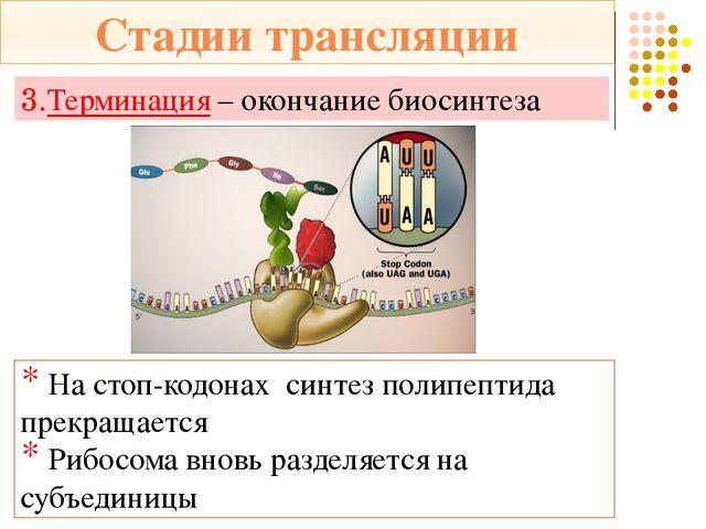 ДНК *Содержит информацию о первичной структуре белка *Служит матрицей для син...