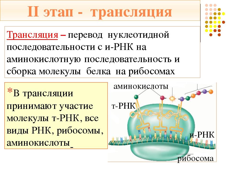 Акцепторный конец – присоединяет аминокислоту Кодовый триплет (антикодон) *Су...