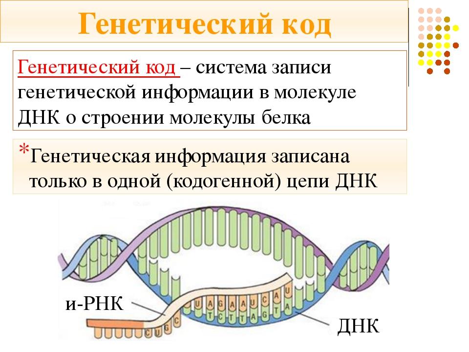 Генетический код – система записи генетической информации в молекуле ДНК о ст...