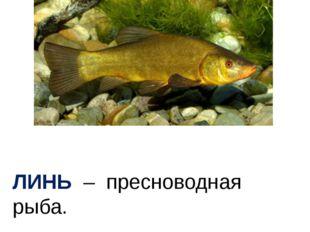 ЛИНЬ – пресноводная рыба.