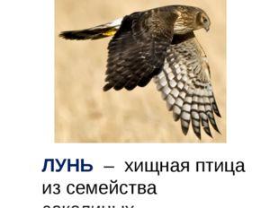 ЛУНЬ – хищная птица из семейства соколиных.