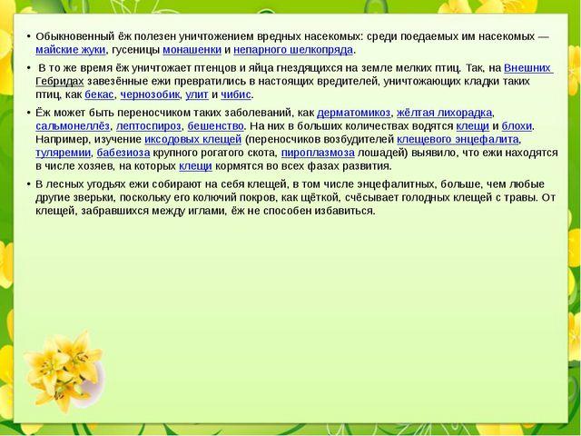 Обыкновенный ёж полезен уничтожением вредных насекомых: среди поедаемых им на...