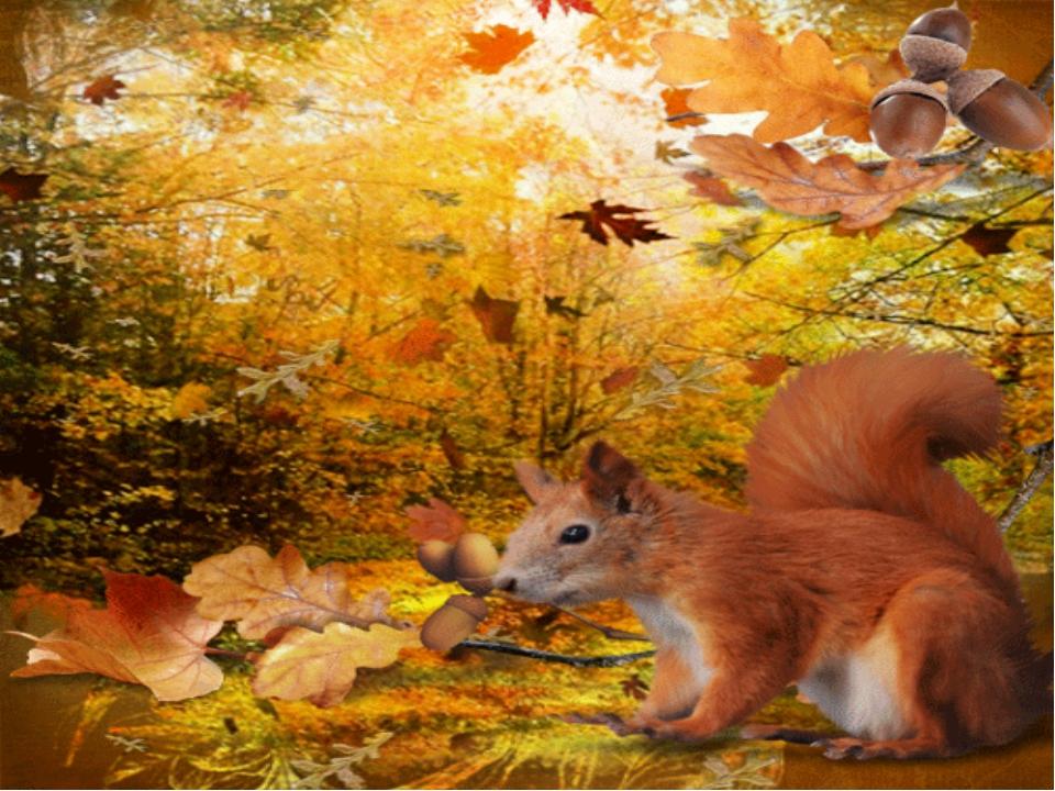 гиф белочка в лесу ооо рн-архангельскнефтепродукт