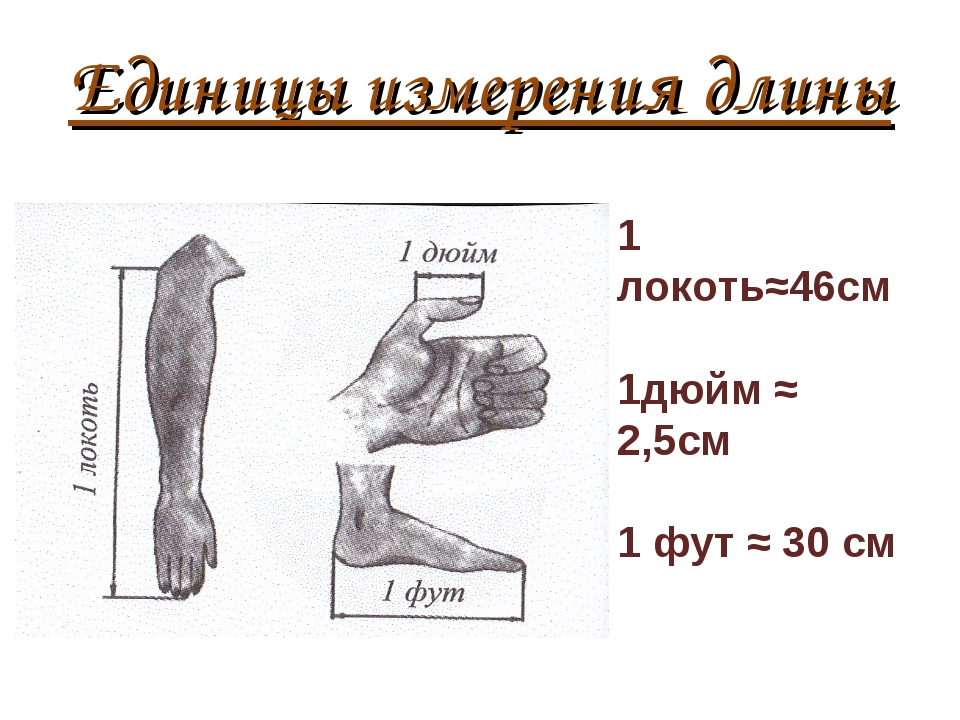 Единицы измерения длины 1 локоть≈46см 1дюйм ≈ 2,5см 1 фут ≈ 30 см
