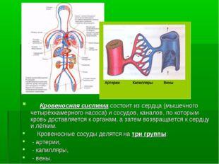 Кровеносная система состоит из сердца (мышечного четырёхкамерного насоса) и
