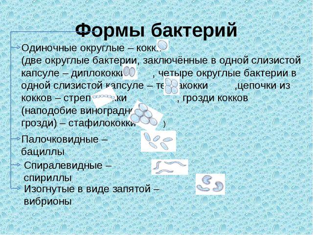 Формы бактерий Одиночные округлые – кокки (две округлые бактерии, заключённые...