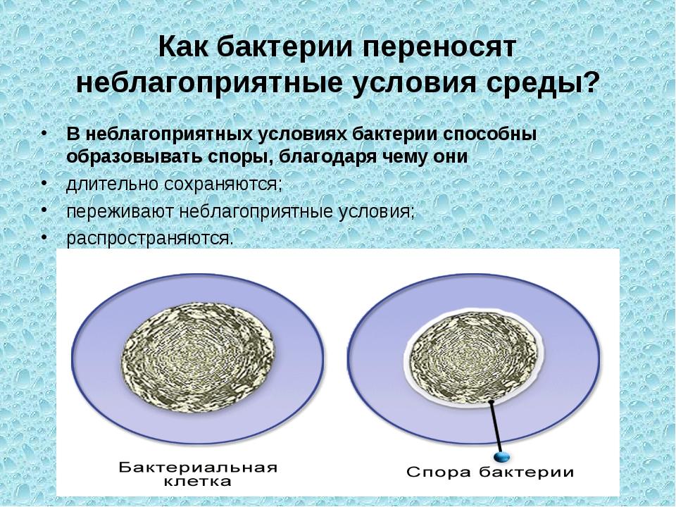 Как бактерии переносят неблагоприятные условия среды? В неблагоприятных услов...