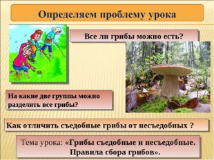 На какие две группы можно разделить все грибы? Как отличить съедобные грибы о